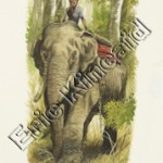 Jungle Book page 106  elephant & rider