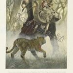 Jungle Book page 107 tiger attacks elephant & rider
