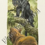 Jungle Book page 28 panther with bear