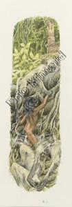 Jungle Book page 40 Mogli with the apes