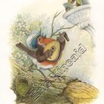 Robin's Serenade