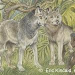 """""""A Man Cub"""" said Father Wolf"""